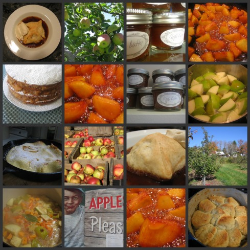Scenes from a cookbook